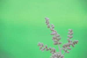 Canva - Closeup Photo of Gray Leafed Plant
